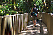 """On one of the walkways of the A.H.Reed memorial Kauri park, Whangarei. It's a """"selfie"""" sometimes you just need to put yourself in the shot!"""