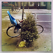 O Christmas Tree<br /> <br /> New York, U.S. - A discarded Christmas tree sits propped up next to a bike along the sidewalk of New York City awaiting pick-up. <br /> <br /> O' Christmas Tree - Launched December 24, 2013 - The Christmas tree has become so popular that 8 in 10 Americans say they plan to put one up this year, according to Pew Research Center, bringing the annual U.S. holiday tree market to $1 billion. For the next week, everyone who celebrates the Christmas holiday will be doting over these brightly lit holiday centerpieces until Christmas finally comes. Then, when it's all over, they'll be just as quickly forgotten. The contrast between affection and then abandonment is central to Bryan Smith's set of images titled 'O Christmas Tree'. Bryan wandered the streets the of New York City creating these beautiful images of abandoned Christmas trees at the end of last years festive season.The tree tradition began in the Middle Ages in Roman Catholic countries, when the Feast Day of Adam and Eve was celebrated on Dec. 24. The Germans would do a procession carrying ''paradise trees'' with apples on them representing the forbidden fruit. In England during the Victorian era, when Queen Victoria married Prince Albert, a German, he brought Christmas trees into their palaces. The first official Christmas tree in the USA was lit up in 1842 In Williamsburg, Virginia. <br /> ©Exclusivepix