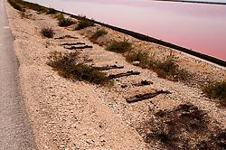 Il complesso produttivo delle saline è situato nel comune italiano di Margherita di Savoia (nome dato dagli abitanti in onore alla regina d'Italia che molto si adoperò nei confronti dei salinieri) nella provincia di Barletta-Andria-Trani in Puglia. Sono le più grandi d'Europa e le seconde nel mondo, in grado di produrre circa la metà del sale marino nazionale (500.000 di tonnellate annue).All'interno dei suoi bacini si sono insediate popolazioni di uccelli migratori e non, divenuti stanziali quali il fenicottero rosa, airone cenerino, garzetta, avocetta, cavaliere d'Italia, chiurlo, chiurlotello, fischione, volpoca..Adiacente alla sponda sono visibili i resti di una vecchia linea ferroviaria.