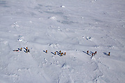 Tourists walking to Emperor Penguin colony at Snow Hills island, Antarctic peninsula