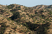 Scenery<br /> Sierra de Andújar Natural Park, Mediterranean woodland of Sierra Morena, north east Jaén Province, Andalusia. SPAIN