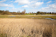 Winter landscape over marshland habitat River Deben valley, Ramsholt, Suffolk, England