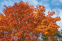Fall - Autumn scenes in Sweden