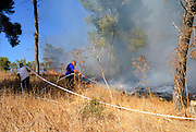 Israel, Fire fighters fighting a forest fire
