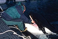 Stephen Claussen Checking Keiko's Teeth