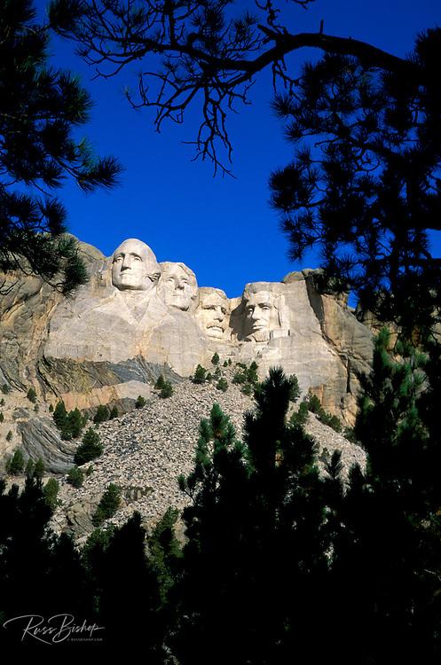 Morning light on Mount Rushmore through silhouetted pine trees, Mount Rushmore National Memorial, South Dakota