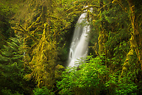 Merriman Falls spilling out of the lush Quinault Rainforest, Olympic National Park, Washington, USA