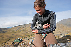 Student Natalie Stafl working on long-term pika research at Pika Camp, an alpine research field camp in the Ruby Range near Kluane Lake Research Station, Yukon