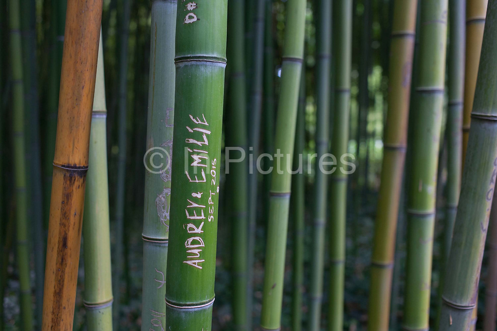 The names of lovers are etched into the surfaces of green bamboo in a corner of the Jardin de Plantes, on 19th June 2016, in Montpellier, France. The public space is close to the Faculty of Medecine and is the oldest botanical garden in France, created in 1593 by Pierre Richer de Bellaval at the request of Henri IV.