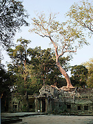 A tree grows through the stone ruin remains of a temple at Angkor, Siem Reap Province, Cambodia