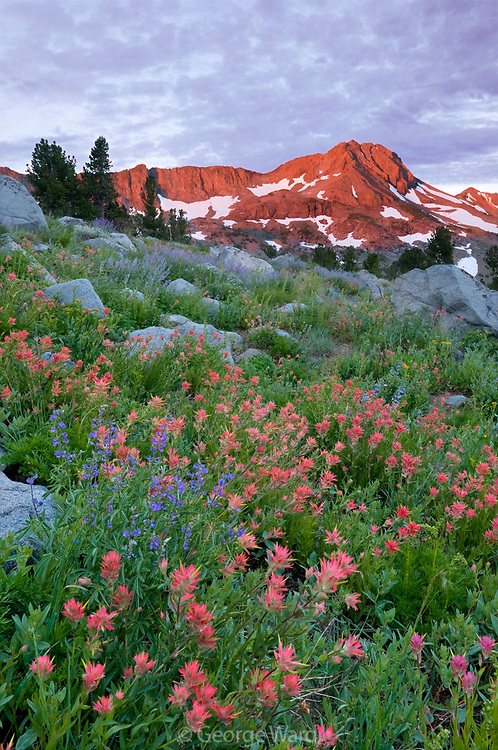 Dawn Light on Mountain and Paintbrush, Mokelumne Wilderness, Eldorado National Forest, California