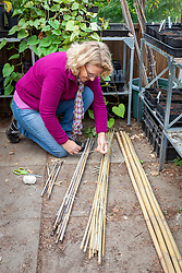 Bringing cane plant supports into the greenhouse for winter storage. Sorting them into different sizes and tying them into bundles