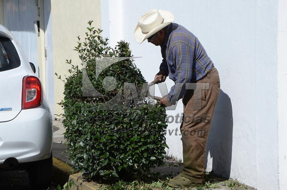 Toluca, México (Octubre 19, 2016).- Raúl Mundo Contreras, jardinero de oficio, con más de 35 años realizando este trabajo en la zona residencial de Colón, haciendo figuras en las arbustos en interior y exterior de las viviendas, originario de Santa Cruz Cuahutenco, en el municipio de Zinacantepec.  Agencia MVT / José Hernández