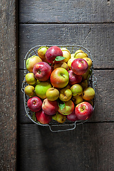 Wire basket of harvested apples. Malus domestica