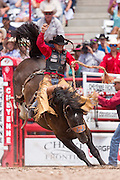 Bareback rider Joe Lufkin hangs on during the Bareback Championships at the Cheyenne Frontier Days rodeo in Frontier Park Arena July 26, 2015 in Cheyenne, Wyoming. Frontier Days celebrates the cowboy traditions of the west with a rodeo, parade and fair.
