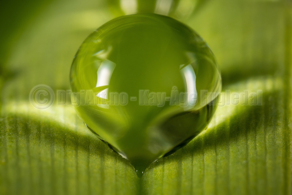 Macro picture of a drop on a leaf   Makrobilde av en dråpe på et blad.