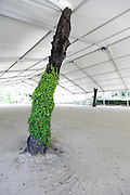tree trunk with green growth within a large tent