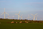 Sheep and young lambs grazing in front of wind turbines on Llyn Alaw Wind Farm in full electricity production during the tail end of Storm Dennis on 17th February 2020 in Anglesey, Wales, United Kingdom. Llyn Alaw Wind Farm is located on Anglesey in North Wales, it consists of 34 turbines with a capacity of 20.4 MW mega watts and can produce an average 60,000 kilowatt hours KWh each year. This is enough to provide electricity for 14,000 homes in the local community.