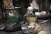 """A young woman holding a child in front of a grocery store in the neighborhood of Mokattam.On the outskirts of Cairo in the middle of Manshiet Nasr neighborhood is located Mokattam settlement known as """"Garbage City"""" is inhabited by Zabbaleen, a community of about 45,000 Coptic Christians living for decades to recycle waste generated by the Egyptian capital: plastic, aluminum, paper and organic waste transformed into compost. Most part of the Association for the Protection of the Environment (APE), an NGO that works in the area, whose objectives are to protect the environment and improve the livelihoods of garbage scavengers in Cairo. According to the UN, the work is done in Mokattam is one of the ten best examples of world environmental improvement. El Cairo , Egipt, June 2011. ( Photo by  Jordi Camí )."""