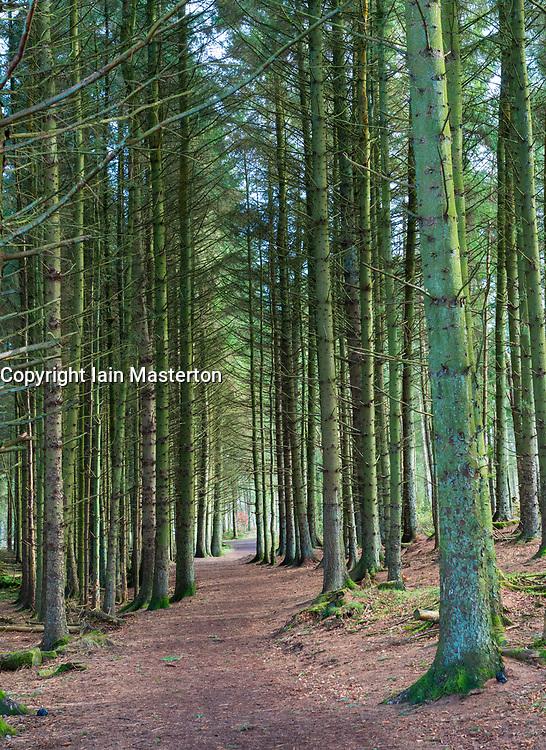 Path through woodland