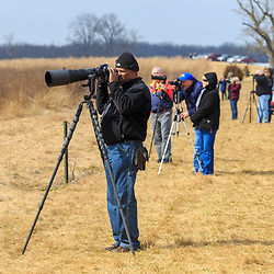 March 6, 2016 - Kleinfeltersville, PA: Birdwatchers photograph the migrating snow geese at Middle Creek Wildlife Management Area near the Lancaster-Lebanon county line in Pennsylvania.