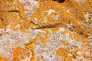 Orange Lichens growing on rocks