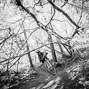 Heather Goodrich rolls through the maples on the Galbraith Trail system near Bellingham Washington.