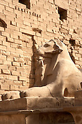 Sphinx at Temple of Amun at Karnak  Luxor, Egypt