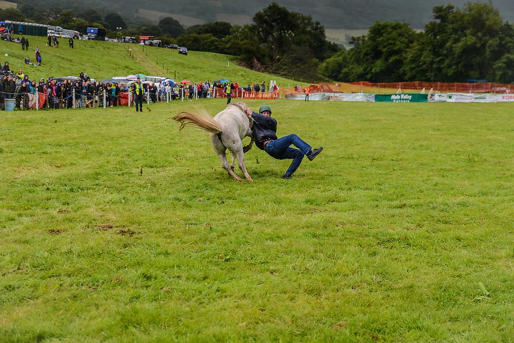 A jockey take a fall