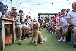 © Licensed to London News Pictures. 13/06/2021. London, UK. A dog watches England v Croatia on the big screen at Skylight Rooftop, Tobacco Dock in London, in England's opening Euro 2020 game. Photo credit: Dinendra Haria/LNP