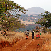 Africa, Tanzania, Karatu. Coffee pickers at  the Shangri-La Estate near Ngorongoro.