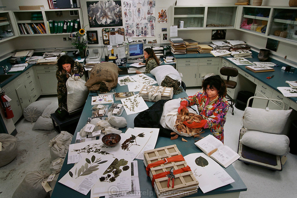 Pharmaceutical technicians cataloguing new plants in a herbarium. The plant samples, which are from all over the world, are weighed (at center left), unpacked (at center right) and entered onto computer (at upper center). The herbarium, or botany room, is where plants are dried, pressed and stuck to sheets for identification purposes (as at bottom left). MODEL RELEASED