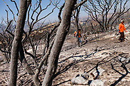 Crews walk past damage from the Whittier Fire in Santa Barbara County east of Goleta, California, Wednesday, July 12, 2017.