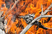 Close up of a forest fire