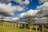 South Burgenland vineyards, Rechnitz, Austria .<br /> <br /> Visit our AUSTRIA PHOTO COLLECTIONS for more photos to download or buy as wall art prints https://funkystock.photoshelter.com/gallery-collection/Pictures-Images-of-Austria-Photos-of-Austrian-Historic-Landmark-Sites/C0000VRQ9JIAzOxc