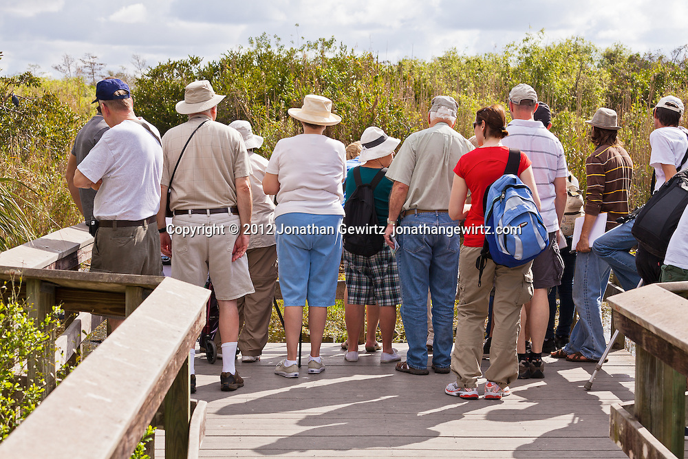 Visitors to the popular Anhinga Trail in Everglades National Park, Florida, observe wildlife from an elevated observation area along the Trail. WATERMARKS WILL NOT APPEAR ON PRINTS OR LICENSED IMAGES.