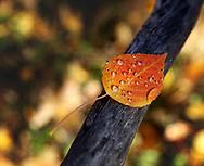 Autumn Moisture in Balance