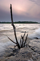 Dead Tree and Incoming Wave, Falls of the Ohio State Park, Indiana