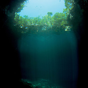 An underwater look at a blue hole in The Bahamas known locally as the sapphire blue hole. It features clear water and is surrounded by trees above. Image made on Eleuthera, Bahamas.