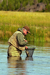 fisherman netting fish while fly-fishing the Madison River In Yellowstone National Park
