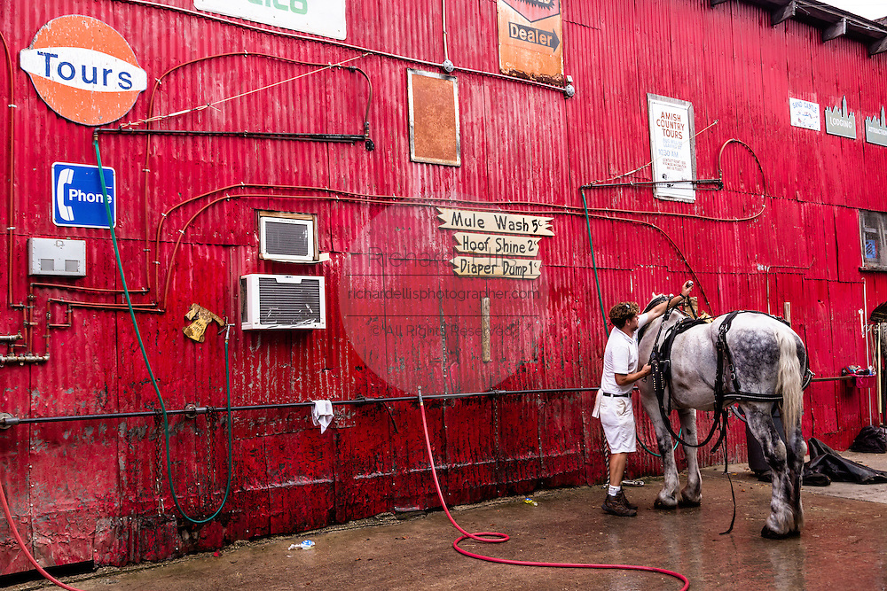 A worker washes a horse at the Palmetto Carriage barn in historic Charleston, SC.