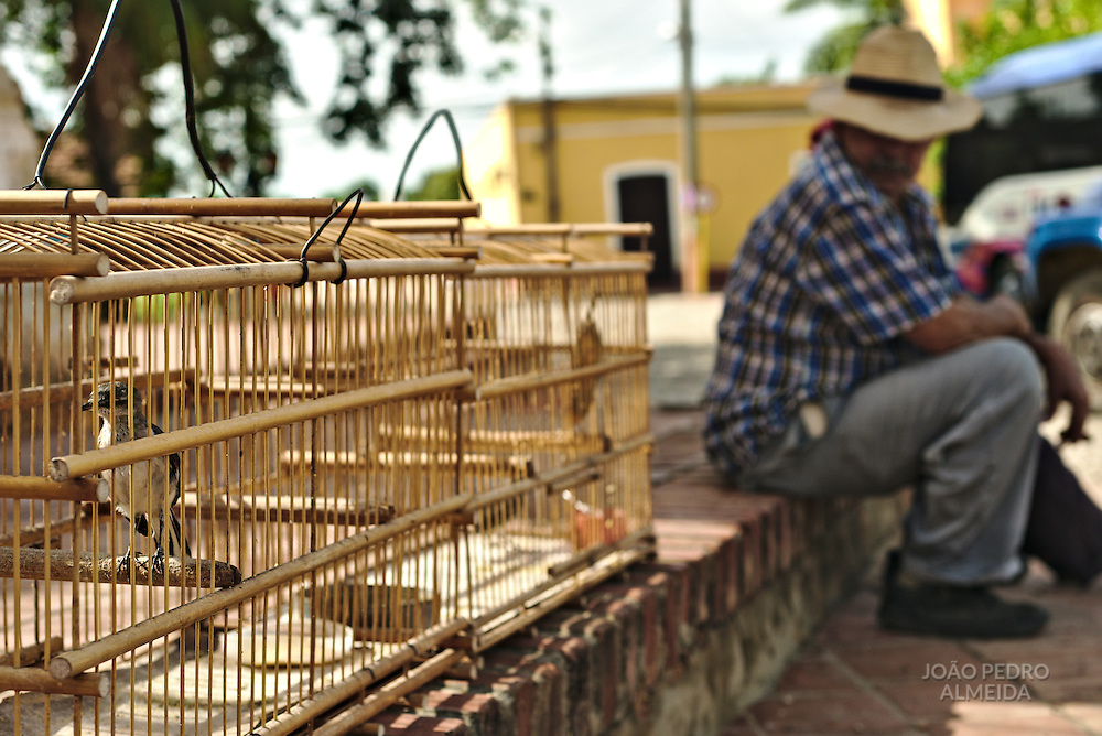 The bird breeder, whi fed the little birds until they're old enough to be sld