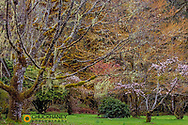 Spring mix of trees at Quinault Ranger Station in Olympic National Park, Washington, USA