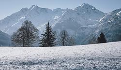 THEMENBILD - unterschiedliche Baumarten auf einer Schneefläche, vor den Hohen Tauern. Das Naturdenkmal Wasenmoos lädt auch im Winter zu ausgedehnten Wanderungen in den Kitzbüheler Alpen ein, aufgenommen am 21. November 2020 in Mittersill, Oesterreich // different tree species on a snowy area, in front of the Hohe Tauern. The natural monument Wasenmoos invites you also in winter to extensive hikes in the Kitzbüheler Alps, in Mittersill, Austria on 2020/11/21. EXPA Pictures © 2020, PhotoCredit: EXPA/Stefanie Oberhauser