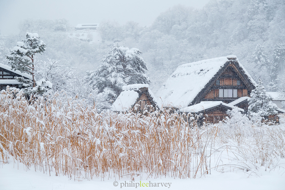 Scenic winter landscape with houses covered in snow, Shirakawa-go, Japan
