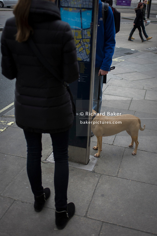 Visual pun of headless people and pet dog in central London.