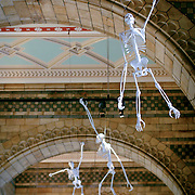 Monkey skeletons hanging from ceiling, London, England (May 2007)