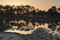 Morning light in the delta pine forrest. The Karavasta Lagoon National Park, Albania June 2009