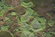Wetland<br /> North west<br /> GUYANA<br /> South America