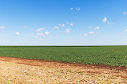 Pasture field under blue sky with cumulus clouds near Kumbia, Queensland, Australia <br /> <br /> Editions:- Open Edition Print / Stock Image